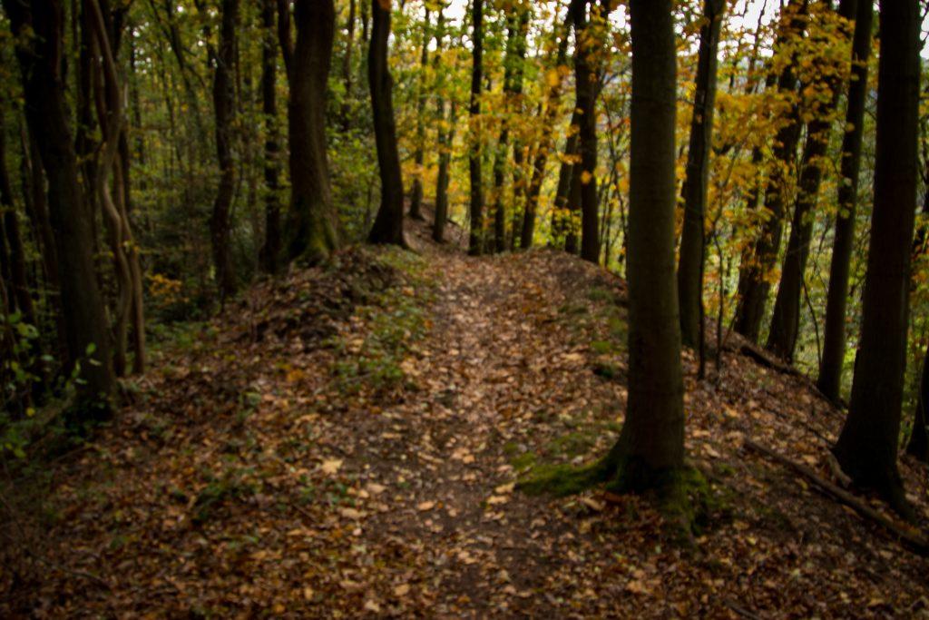 Impressionen aus dem herbstlichen Wald