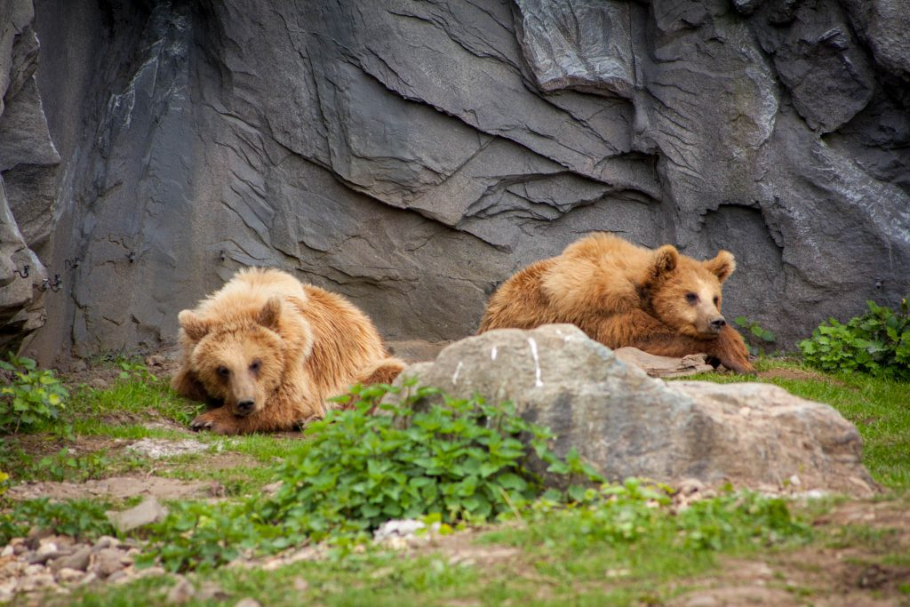 Zoo ZOOM Erlebniswelt Gelsenkirchen