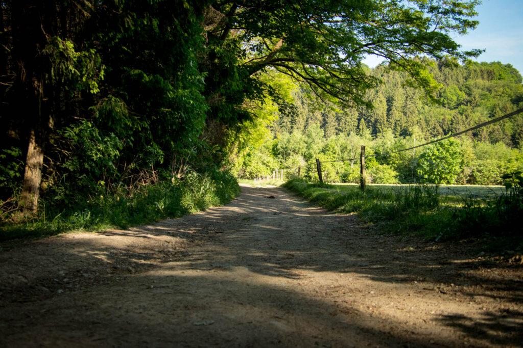 Wandern an der Dhünntalsperre - Rund um die Vorsperre Kleine Dhünn
