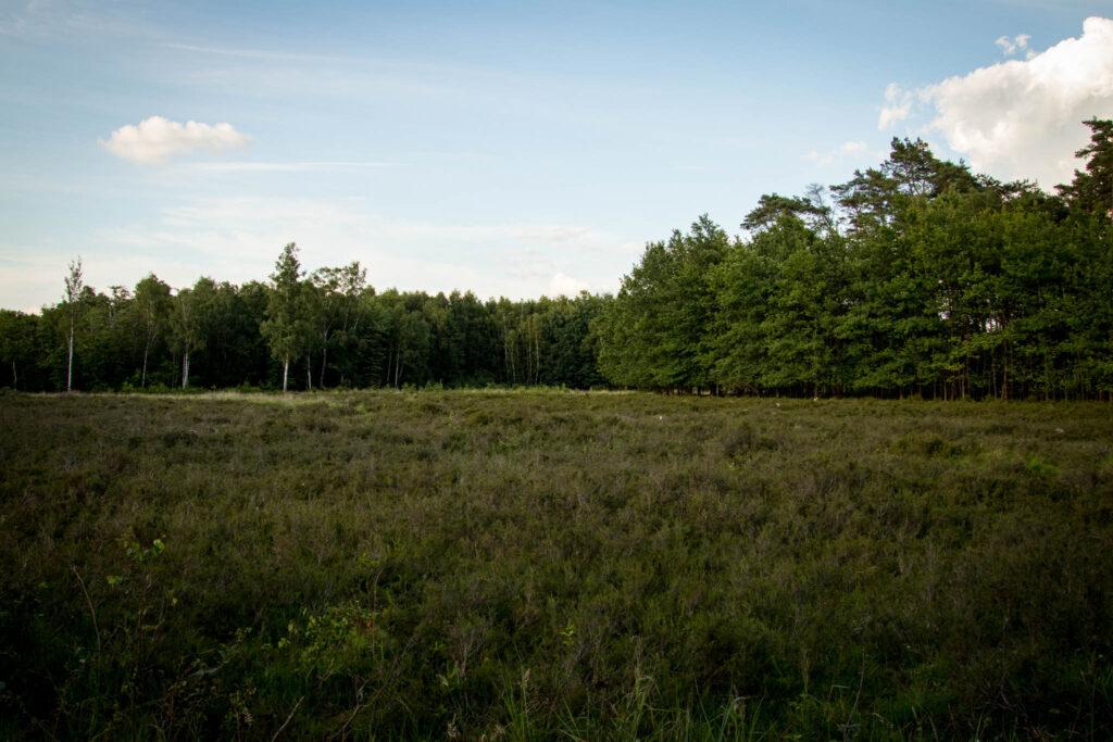 Solingen - Ohligser Heide