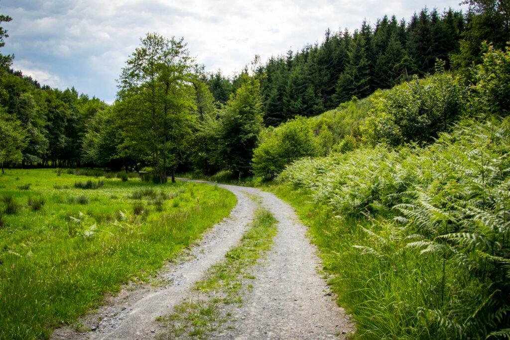 Streifzug Nr. 23 – Waldmythenweg in Waldbröl