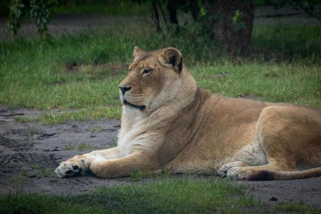Safariland Stukenbrook - Safari zum selber fahren in NRW