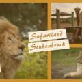 Safariland Stukenbrock - Safari mit dem eigenen Auto