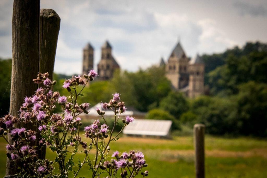 Wanderung um den Laacher See - Ausblick auf die Abtei Maria Laach