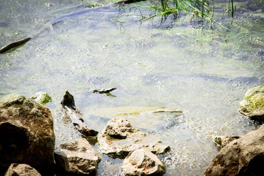 Wanderung um den Laacher See - Mofetten