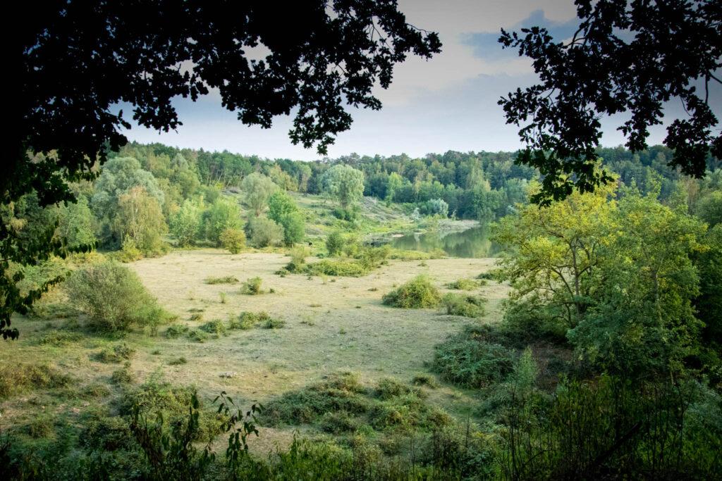 """Zwischen Köln Dünnwald und Leverkusen Schlebusch - Wandern im Naturschutzgebiet """"Am Hornpottweg"""" - Blick vom Rande der ehemaligen Kiesgrube in das Naturschutzgebiet"""