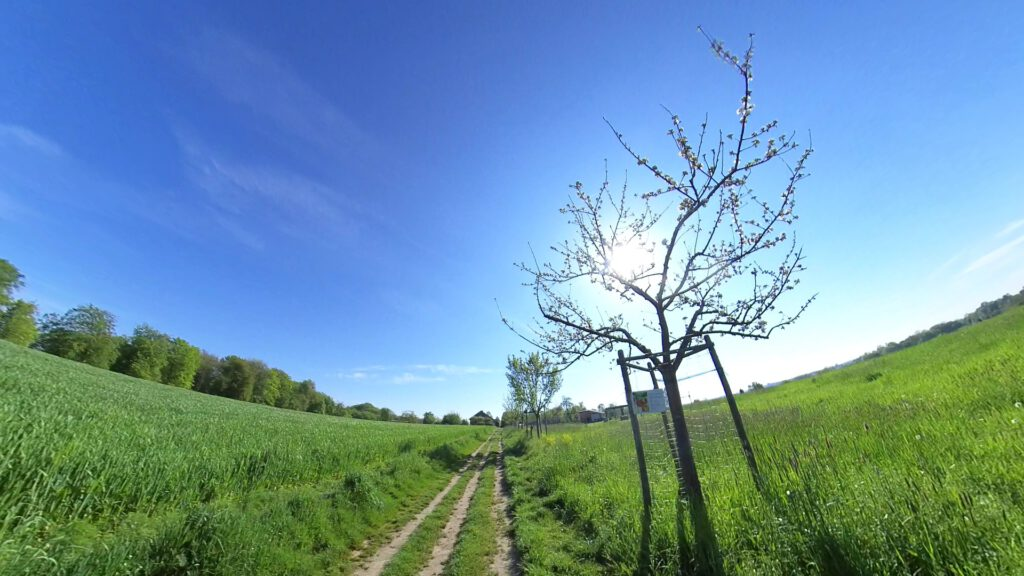 Wandern auf dem Obstweg Leverkusen - Alte Obstbaumsorten am Wegesrand